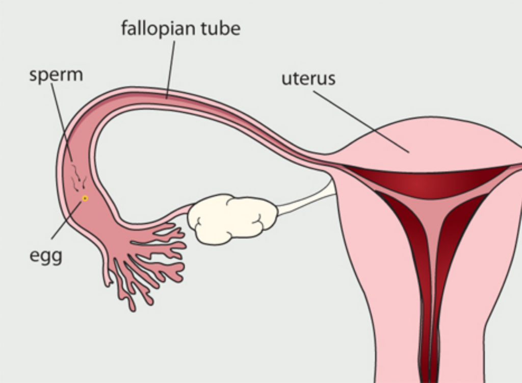 fallopian_tubes_HyCoSy_test